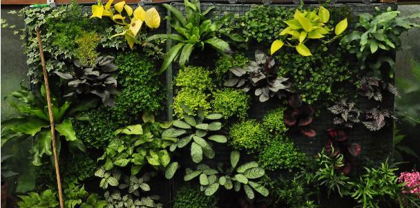Slaapkamergeluk Plant : In deze zelf geconstrueerde serre ...